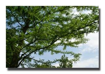arbres-01.jpg