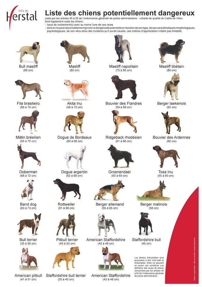 poster-chiens-dangereux- 2.jpg